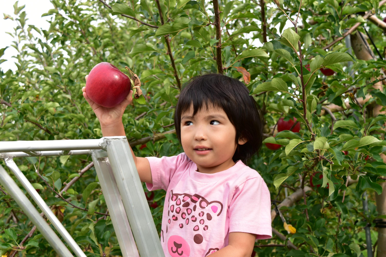 壮瞥くだもの農家浜田園のりんご狩り