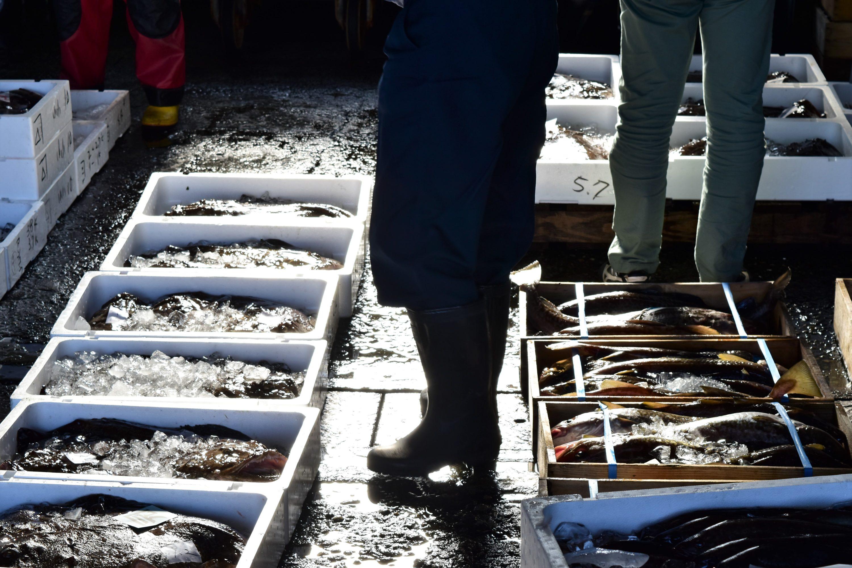 寿都漁港のセリ