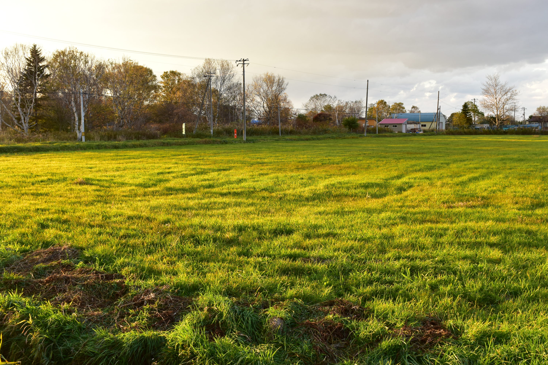 秋の牧草地