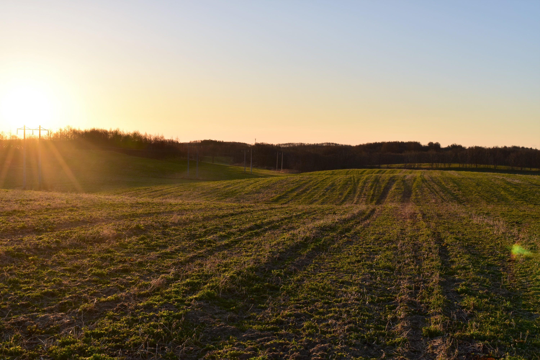 牧草地の丘に昇る朝日