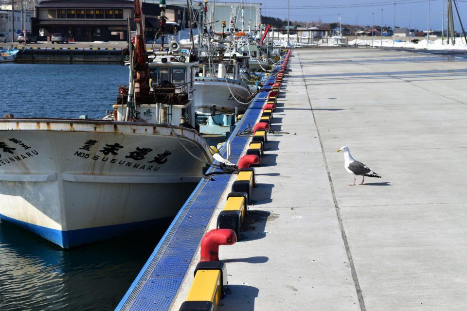 春の寿都漁港