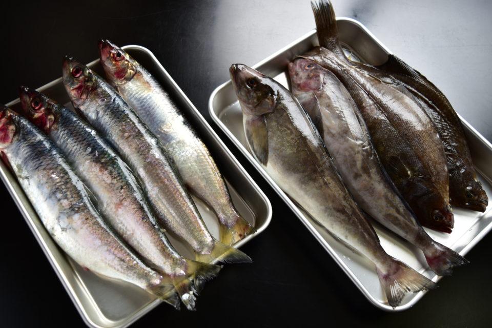 干物の材料の魚