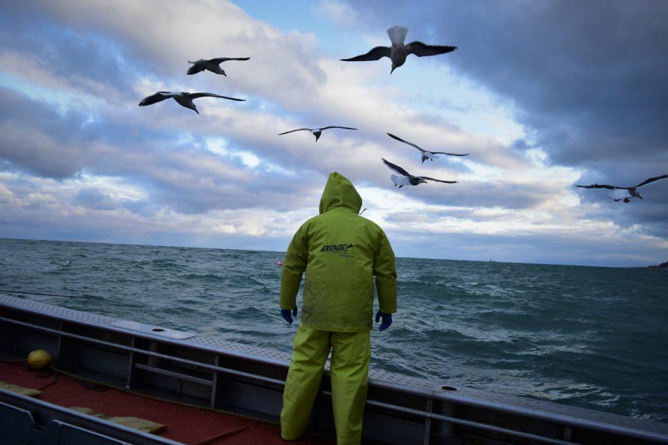 海を見つめる漁師と海鳥