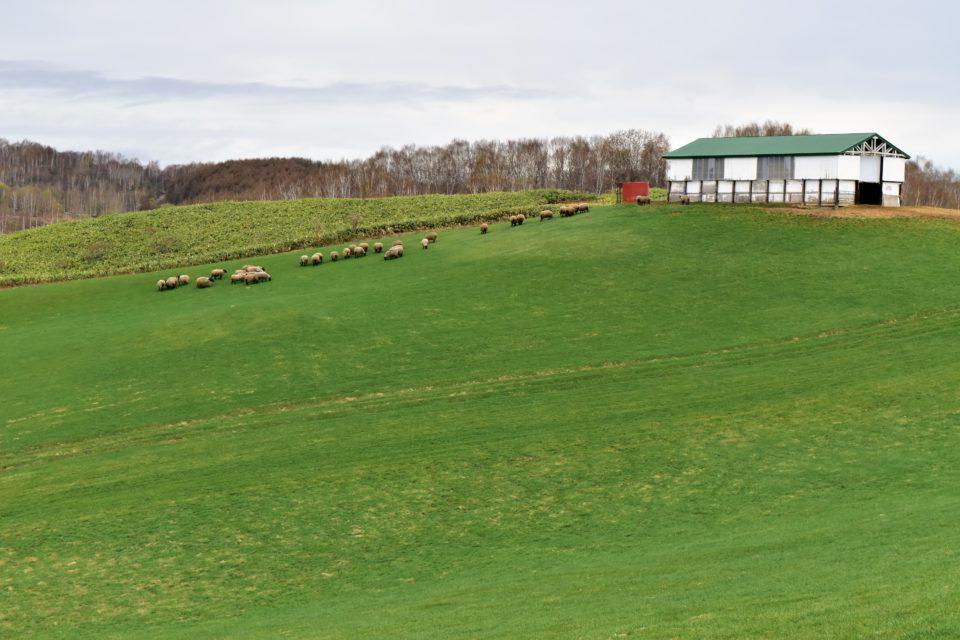 羊と雲の丘