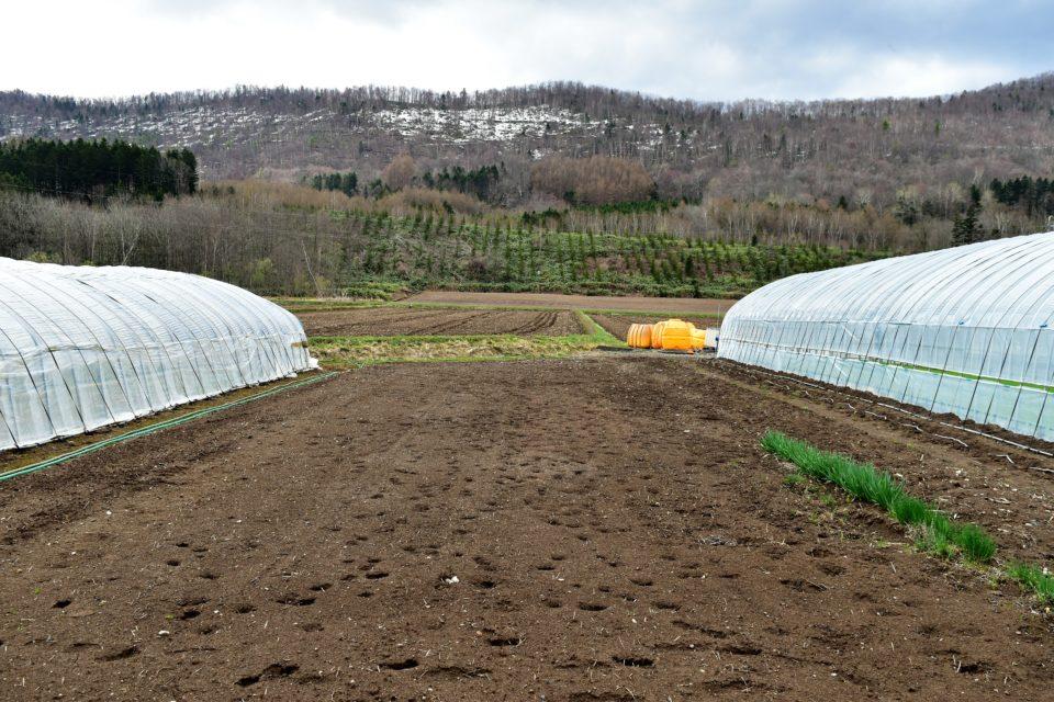辰巳農園の畑