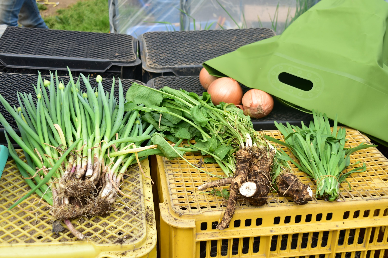 SIO農場での野菜購入