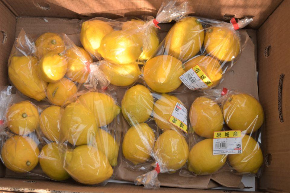 やっと出会えた岩城島のレモン